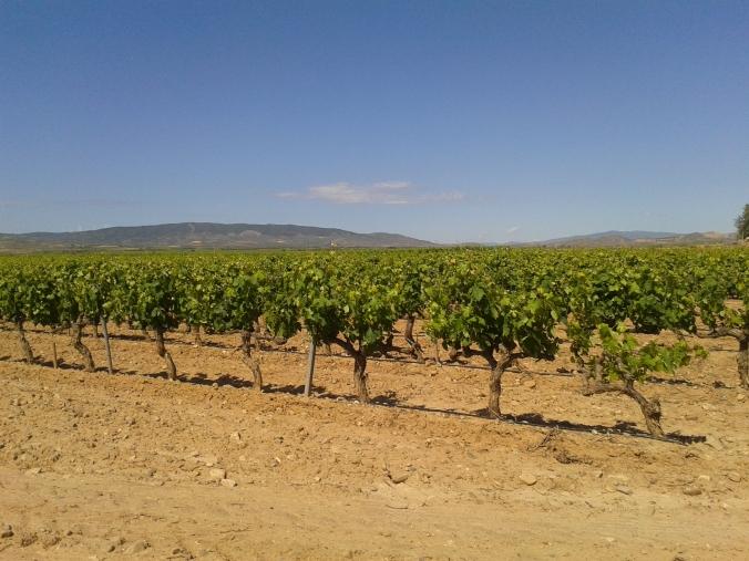 Tierra de Vinos en Navarra