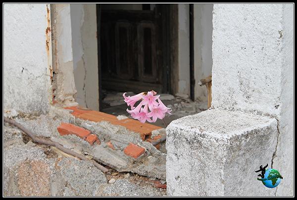 Entre escombros ha nacido esta bella flor en las minas abandonadas de Colmenar del Arroyo.