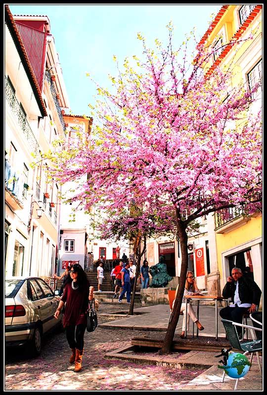Cerezo en flor en Rua Quebra Costas en Coímbra.