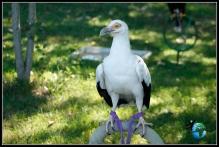 Exhibición de Aves rapaces en Cabárceno.