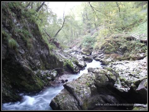 1774 - El río Radovna en la Garganta de Vintgar lun26-9