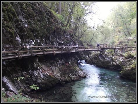 1775 - El río Radovna en la Garganta de Vintgar lun26-9
