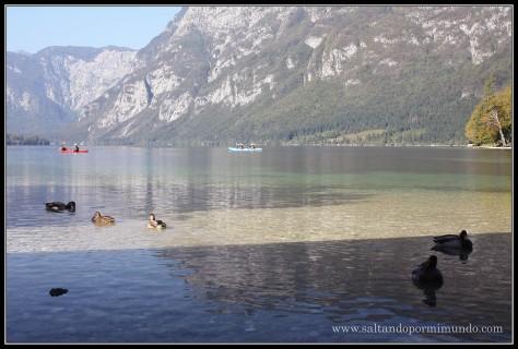 1845 - Lago Bohinj lun26-9