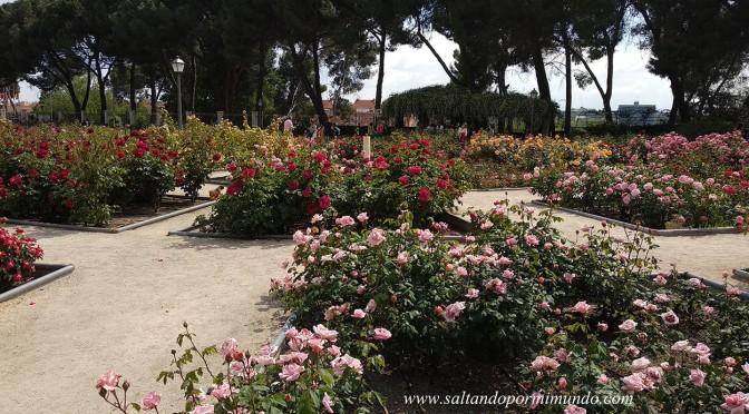 Rosaleda del Parque del Oeste en Madrid