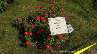 Rosas a concurso 2018. Rosaleda Parque del Oeste, Madrid
