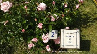 Rosas a concurso 2018. Rosaleda Parque del Oeste, Madrid.