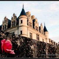 Viaje al Valle del Loira en Navidad. Dia 3. Tours -Chateau Cheverny - Chateau Chambord - Blois - Chateau Chaumunt -Chateau Chenonceau - Tours