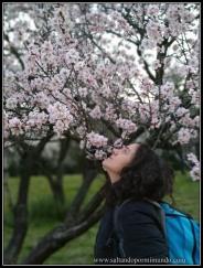 Cerezos y almendros en flor en la Quinta de los Molinos.
