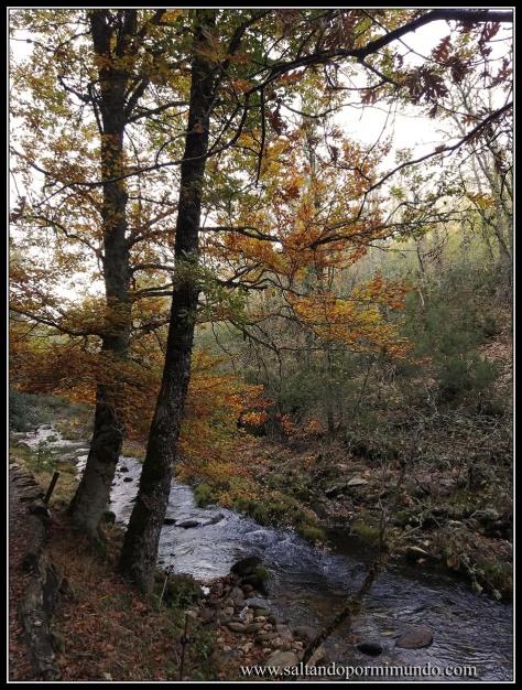 El Hayedo de Montejo es Patrimonio de la Humanidad desde el 2017