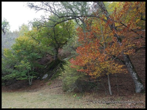 Contraste de colores en el Hayedo de Montejo
