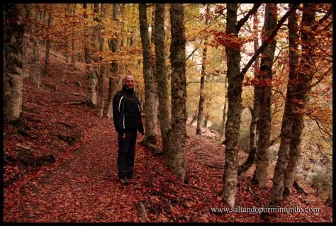 ¿donde encontrar los colores otoñales en Madrid? En el Hayedo de Montejo.